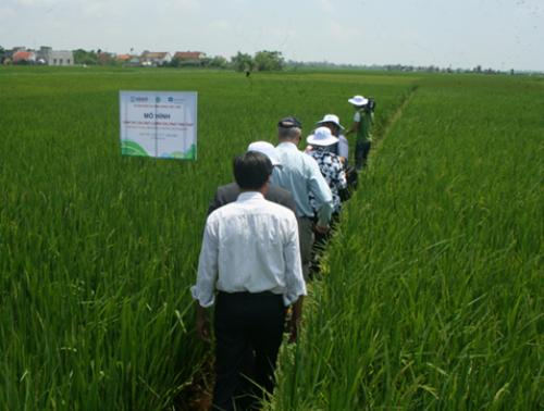 Các cán bộ tỉnh đến thăm đồng lúa của người dân Nam Định. Ảnh: dantri