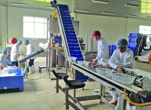 Hệ thống sản xuất ngao sạch của Lenger Việt Nam.