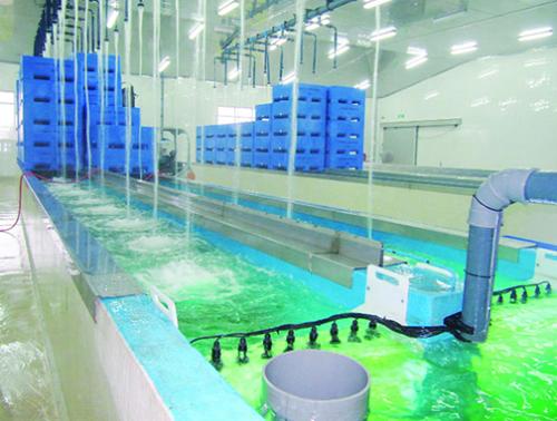Hệ thống làm sạch ngao tự động bao gồm công nghệ xử lý làm sạch nước, sạch khuẩn.