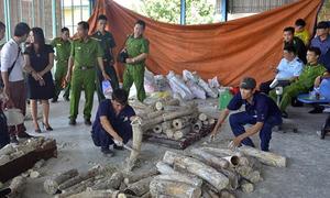 Việt Nam là điểm trung chuyển buôn lậu ngà voi