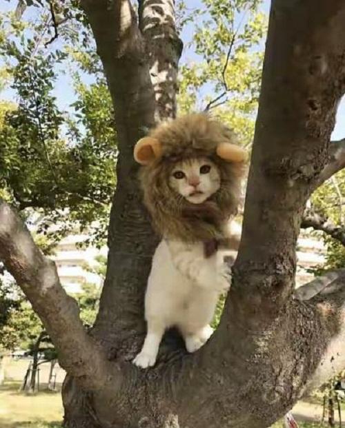Sư tử leo cây.