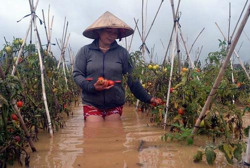 Nước từ thủy điện Đa Nhim xả lũ gây ngập hàng nghìn hecta rau ở huyện Đơn Dương. Ảnh: Thái Hà