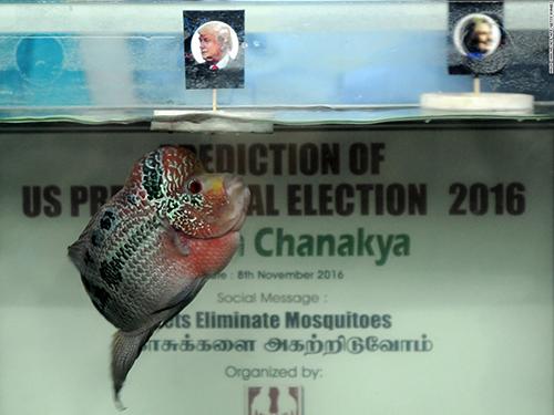 Chú cáChanakya dự đoánứng viên đảng Cộng hòa Donald Trump