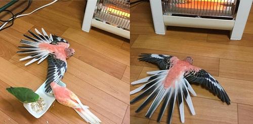 Khi loài chim lười biếng.