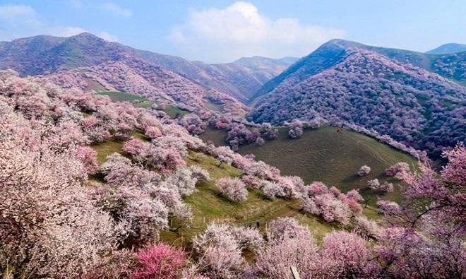10 khu rừng đẹp như trong truyện cổ tích