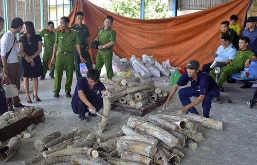 Lực lượng chức năng bắt giữ một tấn ngà voi được giấu bên trong container ở TP HCM hồi cuối tháng 10. Ảnh: Q.T