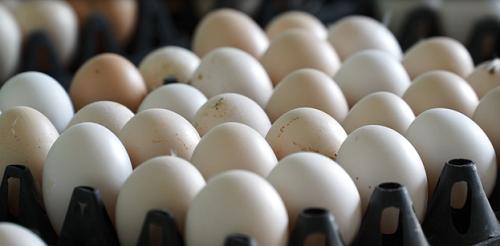 Trứng gà Ai Cập có màu sắc và kích thước tương đương với trứng gà ta, có tỷ lệ lòng đỏ cao trên 30%, đặc cùng chất lượng đồng đều đã được người dùng đón nhận. Ảnh: BizMedia