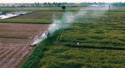 Diện tích trồng lúa lớn, chất gạo ngon, sản lượng tăng dần nhưng đầu ra chưa ổn định khiến người nông dân Nam Định còn phải vất vả mãi với ruộng đồng. Ảnh: Bizmedia