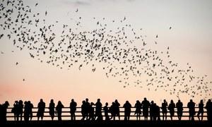 Du khách đứng kín cầu để ngắm cả triệu con dơi bay qua