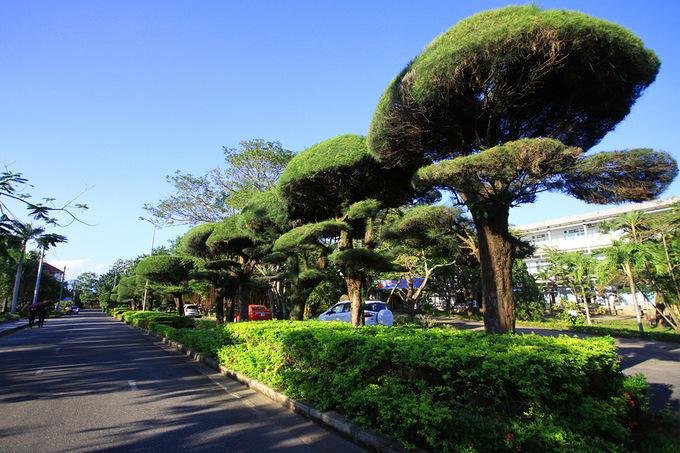 Không gian ngập tràn cây xanh ở Đại học Bách khoa Đà Nẵng