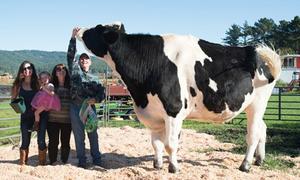 Con bò cao gần 2 m, nặng hơn 1 tấn ở Mỹ
