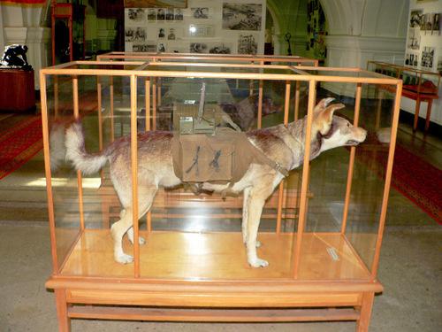 cho-chong-tang-vu-khi-dang-so-trong-the-chien-ii-1