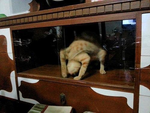 Khi mèo tập yoga.