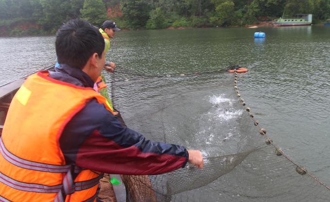 Hàng tấn cá mè được đánh bắt khi hồ thủy lợi xả lũ
