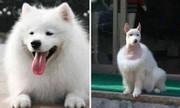 Những màn lột xác của cún cưng sau khi được cắt tóc