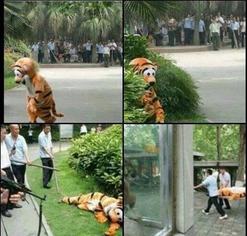 Thực tập cứu hộ tại sở thú.