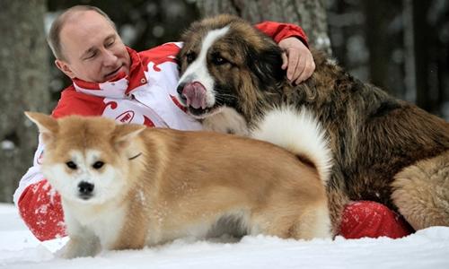 Tổng thống Nga Vladimir Putin chơi đùa với Yume (lông vàng) và
