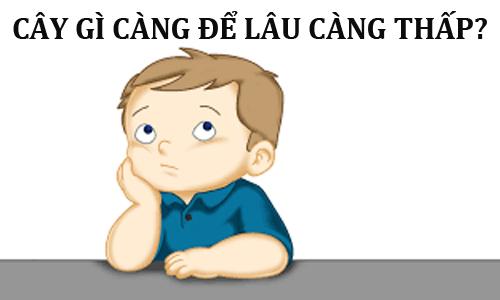 10-cau-do-kinh-dien-thach-thuc-tri-thong-minh-cua-ban-6