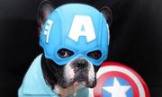 Khi thú cưng hóa thân thành những siêu anh hùng