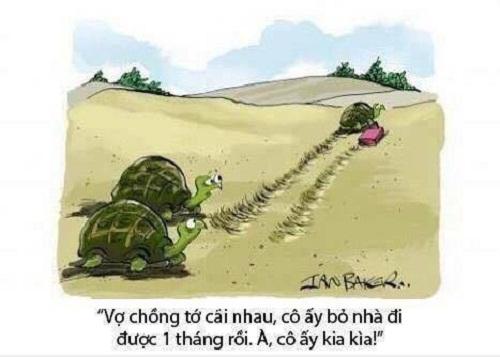 Chuyện vợ chồng nhà rùa.