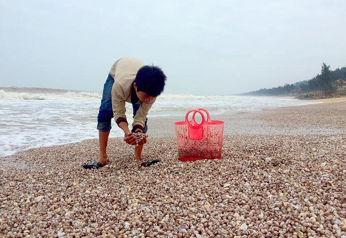 Dân trúng 'lộc trời' nhờ sò lông dạt trắng bờ biển