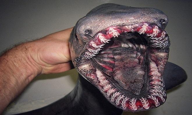 Ngư dân Nga chia sẻ bộ sưu tập quái vật đại dương gây sốt
