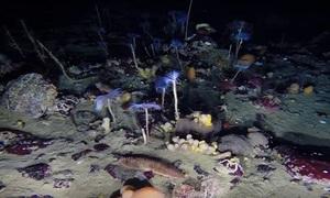 Thế giới đại dương nhiều màu sắc dưới lớp băng Nam Cực
