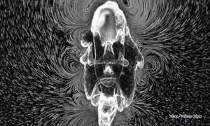 Xoáy nước tuyệt đẹp do ấu trùng sao biển tạo ra khi kiếm ăn