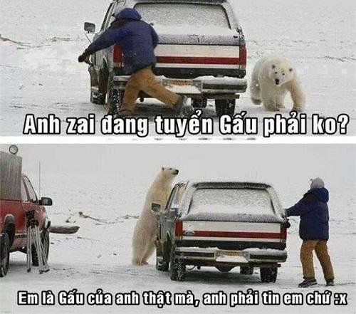 Không phải gấu nào anh cũng thích.