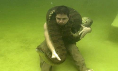 tran-anaconda-khong-lo-quan-quanh-co-nguoi-dan-ong-duoi-nuoc-1