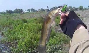 Cao thủ câu hàng loạt cá lóc bằng ếch nhựa