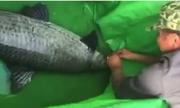 3 người kéo cá trắm 'khủng' dài hơn một mét lên bờ