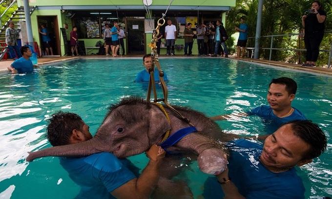 Voi con Thái Lan tập bơi trong nước để chữa bệnh