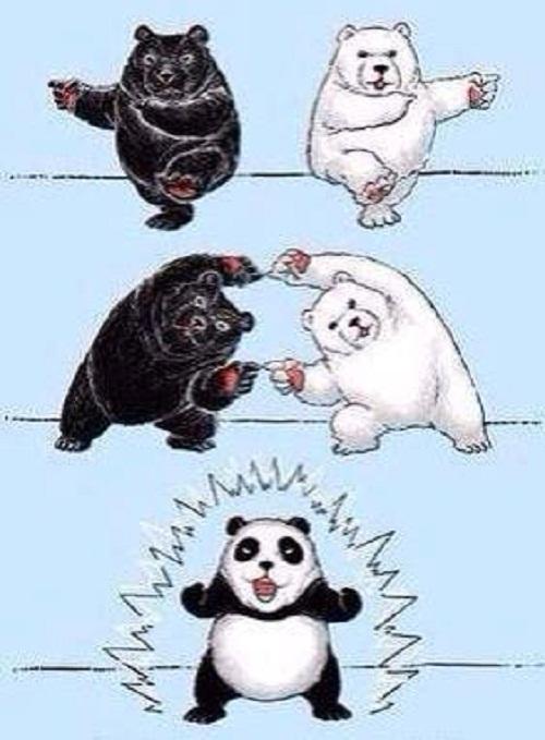 Cách gấu trúc ra đời.