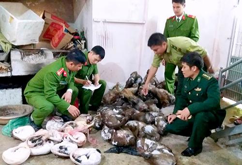 gan-300-kg-dong-vat-hoang-da-trong-nha-dan