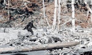 6 sinh vật nghi người tuyết trong công viên quốc gia Mỹ