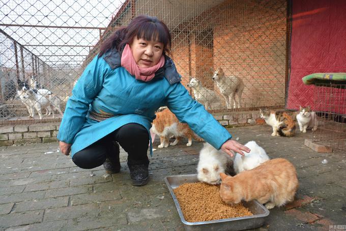 Người phụ nữ cưu mang 6.000 chó mèo suốt 16 năm