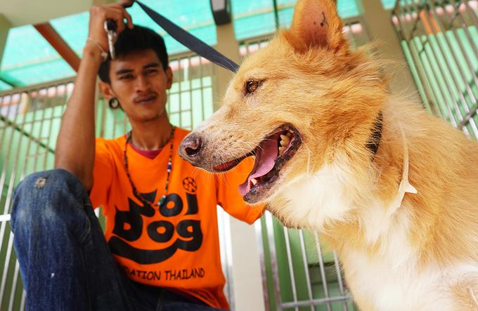 Soi Dog - thiên đường của chó mèo ở Thái Lan