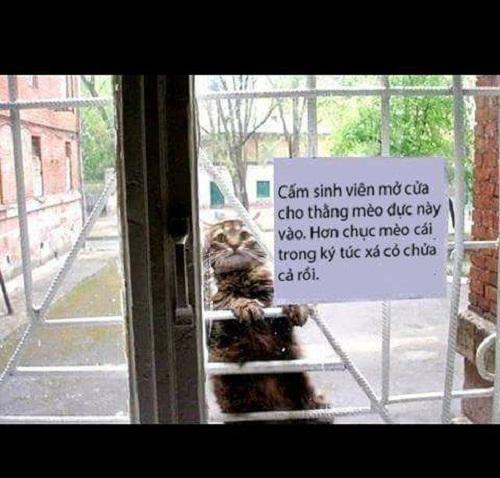 Con mèo lăng nhăng nhất thế giới.