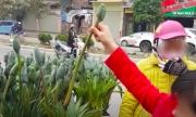 Đám đông lật tẩy người bán lan Tết cắm cành hoa vào gốc cây