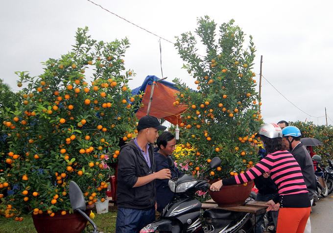 Chợ hoa Tết miền Trung nhộn nhịp
