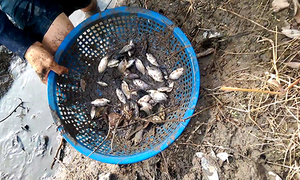 Chàng trai bắt hàng trăm con cá chỉ bằng một cái rổ