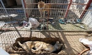 Động vật gầy trơ xương vì đói trong sở thú Iraq