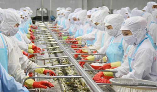 Người đứng đầu Chính phủ đặt ra mục tiêu cho ngành xuất khẩu tôm đạt 10 tỷ USD vào năm 2025. Ảnh: Phúc Hưng
