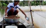 Hàng nghìn con cá háu đói bơi theo người đàn ông