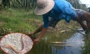 Thanh niên câu được lươn khủng dài 70 cm ở Tiền Giang