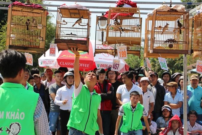 500 chim chào mào thi 'hót hay, nhảy đẹp' ở Huế