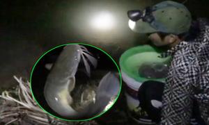 Câu đêm bắt rắn và cá trê ở trong rừng Bình Dương