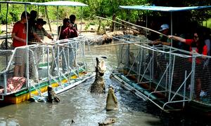 Khách Tây thích thú câu cá sấu ở ven Sài Gòn