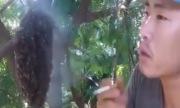 Người đàn ông bắt ong chỉ bằng một điếu thuốc